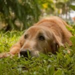 7 Tips to Keep Your Pets Safe from Antifreeze Poisoning