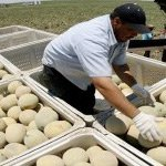 Salmonella Outbreak linked to Cantaloupe