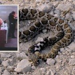 Father left Daughter in Car to Hunt Rattlesnakes